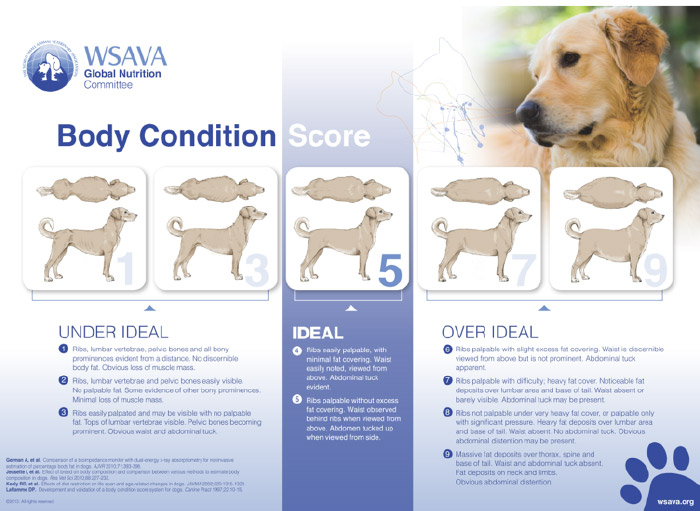 the wsava global nutrition committee body condition score guide
